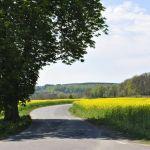 Vägen till vingården