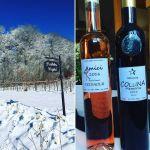 vingård amicii colina